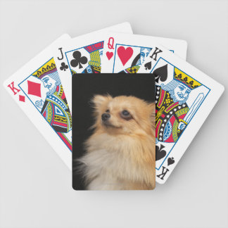 Pomeranian looking up on black bicycle playing cards