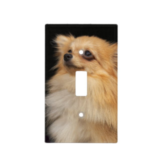 Pomeranian looking up on black light switch cover