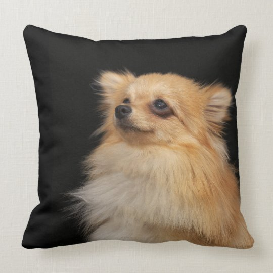 Pomeranian looking up on black throw pillow