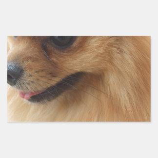 Pomeranian Lover Rectangular Sticker