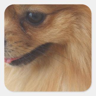 Pomeranian Lover Square Stickers