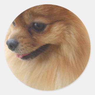Pomeranian Lover Round Sticker