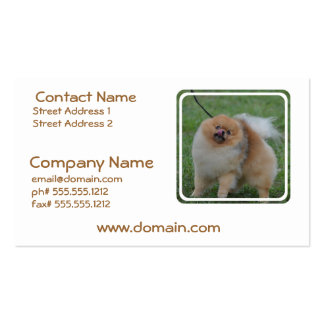 Pomeranian mullido tarjeta de visita