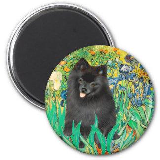 Pomeranian (negro) - iris imán redondo 5 cm