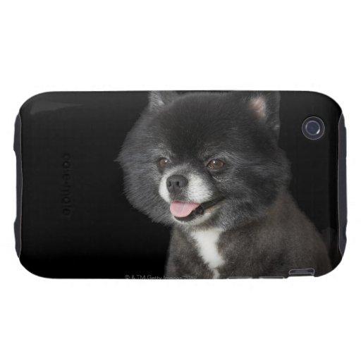 Pomeranian negro que mira a la izquierda iPhone 3 tough protector