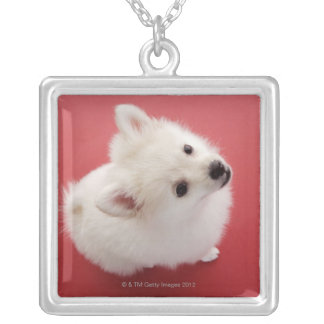 Pomeranian on the Red Carpet Silver Plated Necklace