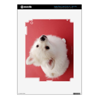 Pomeranian on the Red Carpet Skin For iPad 3