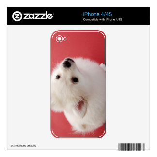 Pomeranian on the Red Carpet Skin For The iPhone 4
