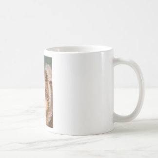 Pomeranian - Peaches and Cream on a Mug