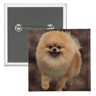 Pomeranian Pinback Button