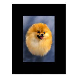 Pomeranian Portrait ACEO Art Trading Card Postcard