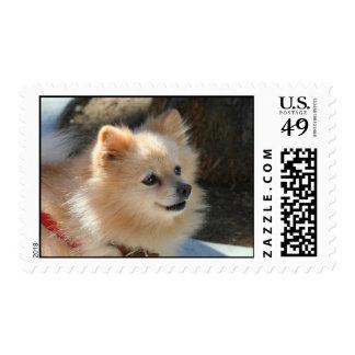 Pomeranian postage