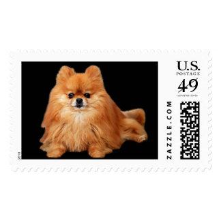 Pomeranian Postage Stamp