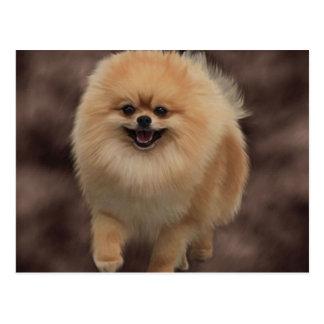 Pomeranian Postales
