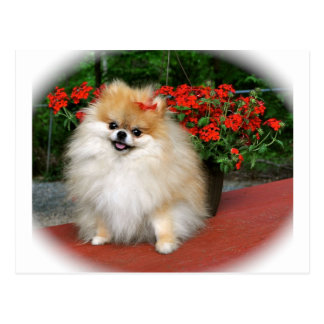 Pomeranian Postcards