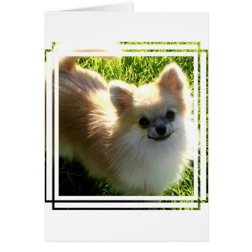 Pomeranian Puppies Card