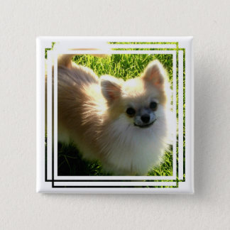 Pomeranian Puppies Pin