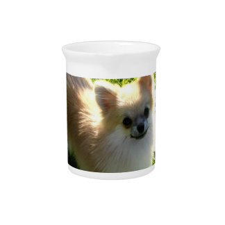 Pomeranian Puppies Pitcher