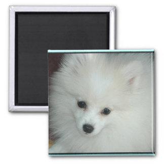 Pomeranian Puppy Magnet