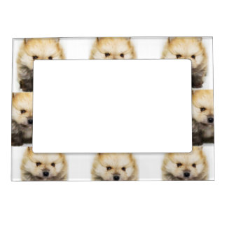 Pomeranian puppy picture frame magnet