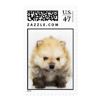 Pomeranian puppy postage
