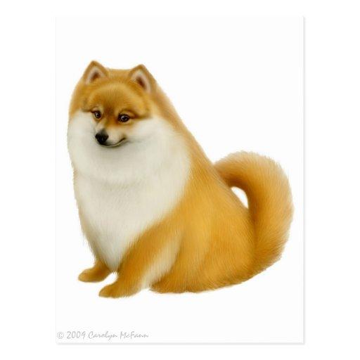 Pomeranian Puppy Postcard