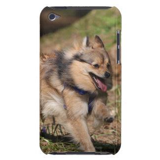 Pomeranian que corre con el arnés encendido iPod touch Case-Mate cobertura