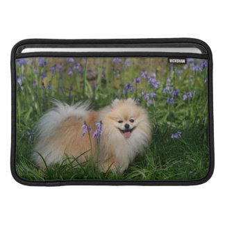 Pomeranian que se coloca de mirada de la cámara funda  MacBook
