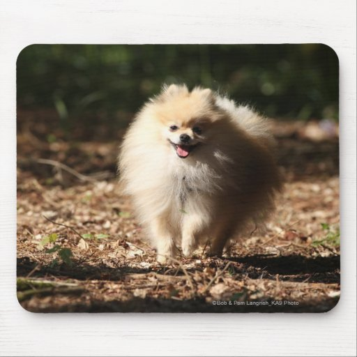 Pomeranian que trota en las hojas caidas alfombrilla de ratones