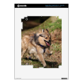 Pomeranian Running with Harness on Decal For iPad 3