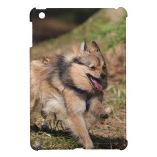 Pomeranian Running with Harness on iPad Mini Cover