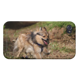 Pomeranian Running with Harness on iPhone 4 Case