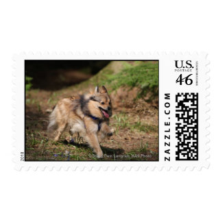 Pomeranian Running with Harness on Postage Stamps