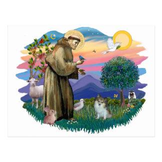 Pomeranian (sable-white) postcard