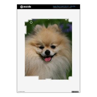 Pomeranian Smiling iPad 3 Skin