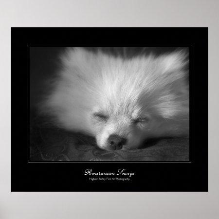 Pomeranian Snooze, Fine Art gallery-style Poster