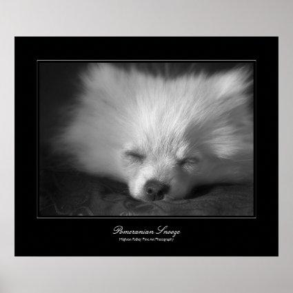 Pomeranian Snooze, Fine Art gallery-style Posters