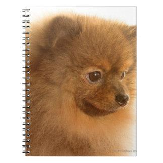 Pomeranian Spiral Notebook