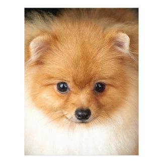 Pomeranian spitz letterhead