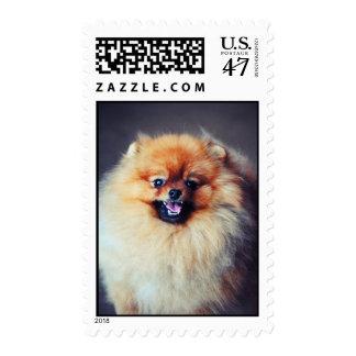 Pomeranian Stamps