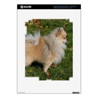 Pomeranian Standing Decals For iPad 3