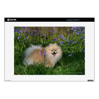 """Pomeranian Standing Looking at Camera Skin For 15"""" Laptop"""