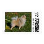Pomeranian Standing Stamp