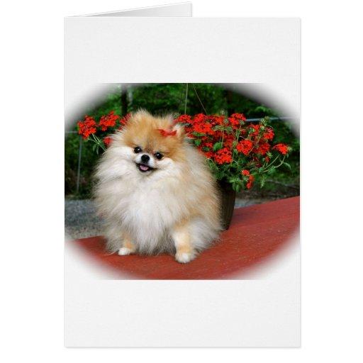 Pomeranian Tarjeta De Felicitación