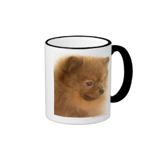 Pomeranian Taza De Dos Colores