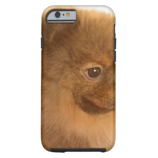Pomeranian Tough iPhone 6 Case