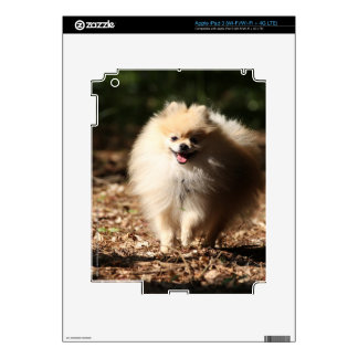 Pomeranian Trotting in the Fallen Leaves iPad 3 Decal