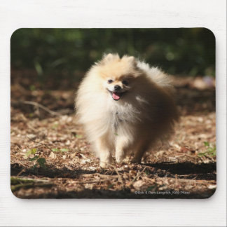 Pomeranian Trotting in the Fallen Leaves Mouse Pad