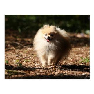 Pomeranian Trotting in the Fallen Leaves Postcard