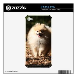 Pomeranian Trotting in the Fallen Leaves Skin For iPhone 4